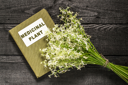 enveloping: Medicinal plant wild orchid or Lesser Butterfly Orchid (Platanthera bifolia) and herbalist handbook. In herbal medicine are used roots. Rare plants, some countries banned collection of raw materials