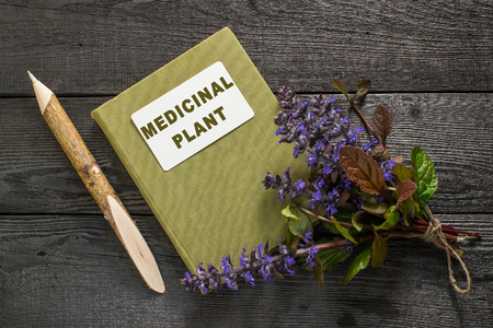 herbolaria: planta medicinal Ajuga reptans y manual de herbolario. Se utiliza en la medicina natural y como una planta comestible, en horticultura, nectariferous Foto de archivo