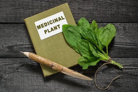 herbalist: Com�n de pl�tano planta medicinal (Plantago major) y herbolario directorio en una tabla de madera
