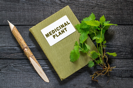 herbolaria: ortiga planta medicinal (Urtica dioica) y el manual de herbolario en la mesa de madera vieja. Se utiliza en la preparación y producción de tejidos de alimentos