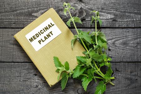herbolaria: Medicinal officinalis planta de melisa y manual de herbolario en una mesa de madera oscura Foto de archivo