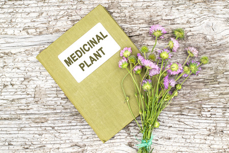 tannins: Medicinal plant Knautia arvensis, commonly known as field scabious and herbalist handbook on old wooden table. Used in herbal medicine, is a major source of nectar