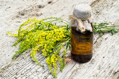 expectorant: Melilotus officinalis, known as yellow sweet clover, yellow melilot, ribbed melilot, common melilot and pharmaceutical bottle on old wooden table. Used in herbal medicine, as well as pasture or livestock feed, is a major source of nectar