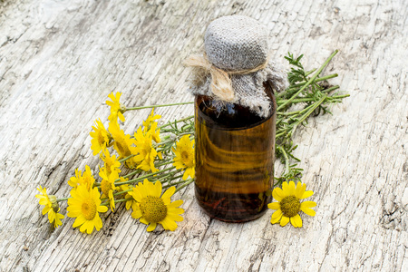 pharmaceutical bottle: Cota tinctoria synonym Anthemis tinctoria (golden marguerite, yellow chamomile, oxeye chamomile) and pharmaceutical bottle on old table. Used in herbal medicine and for the production of yellow dyes