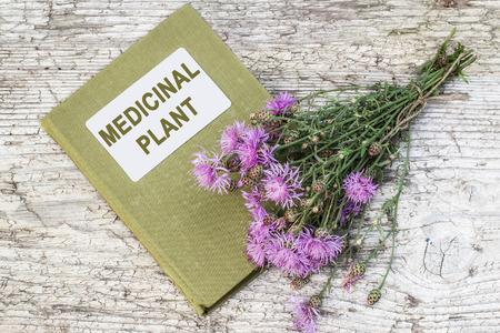 herbalist: planta medicinal Centaurea jacea (Centaurea o brownray marr�n Centaurea) y el manual de herbolario en el vector viejo. Se utiliza en la medicina natural, as� como una buena planta de miel