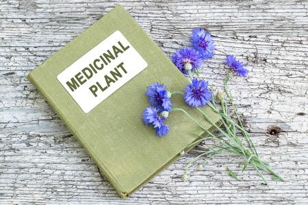herbalist: Centaurea cyanus planta medicinal, com�nmente conocido como harina de ma�z y de herbolario manual sobre la mesa de madera vieja