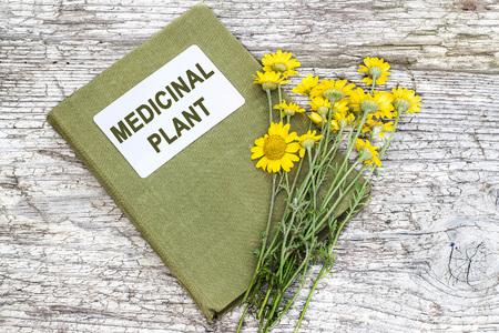 herbolaria: Cota de sin�nimos tinctoria del Anthemis tinctoria (Marguerite de oro, amarillo manzanilla, manzanilla ojo de buey) y el manual de herbolario en el vector viejo. Se utiliza en la medicina herbal y para la producci�n de colorantes amarillos