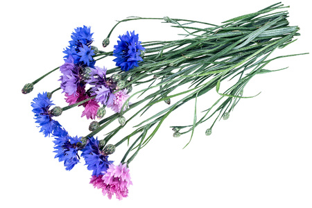 garden cornflowers: Colorful bouquet of summer garden flowers. Cornflowers (Centaurea) isolated on a white background Stock Photo