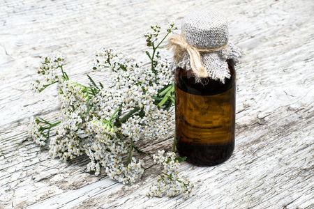 millefolium: Medicinal plant yarrow (achillea millefolium) and pharmaceutical bottle on old wooden table. Yarrow - a popular means of treatment in herbal medicine, has anti-inflammatory and antiseptic properties