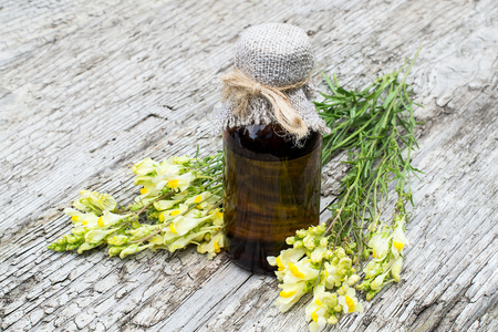 expectorant: Linaria vulgaris (common toadflax, yellow toadflax, or butter-and-eggs) and pharmaceutical bottle on old wooden table. In herbal medicine is used in the form of tinctures and ointments