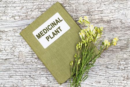 herbalist: Linaria vulgaris (toadflax com�n, toadflax amarillo o mantequilla-y-huevos) y el manual de herbolario en la vieja mesa de madera. En la medicina a base de hierbas se utiliza en forma de tinturas y ung�entos