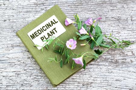 herbolaria: Campo de la planta medicinal correhuela (Convolvulus arvensis) y el manual de herbolario en la vieja mesa de madera. Se utiliza en la medicina natural, planta de miel