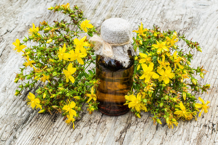 pharmaceutical bottle: Medicinal plant St. Johns wort (Hypericum) and pharmaceutical bottle on old wooden table. Actively used in herbal medicine, excellent bee plant