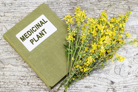 valued: Mullein, also known as velvet plant (Verbascum) and herbalist handbook on old wooden table. Plant is highly valued in herbal medicine, it is used in the form of infusions, decoctions, ointments, oils