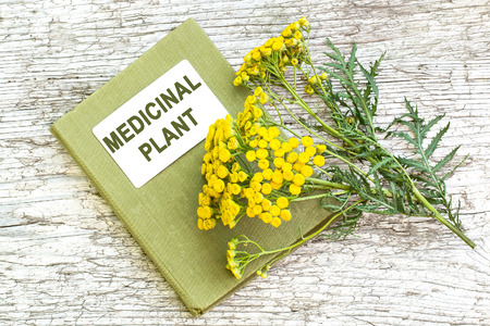 herbolaria: Medicinal plant tansy (Tanacetum vulgare) and herbalist handbook on old wooden table. It is used in herbal medicine, pharmaceutical, food and chemical industry