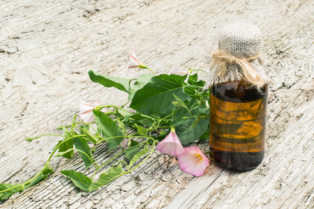 clambering: Medicinal plant field bindweed (Convolvulus arvensis) and pharmaceutical bottle on old wooden table. Used in herbal medicine, honey plant Stock Photo