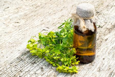 薬用植物ユーフォルビア esula、医薬品ボトルや葉トウダイグサ緑: spurge-通称。漢方薬軟膏、ラテックス、煎じ薬の形で使用。注意してください、有 写真素材
