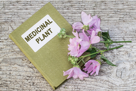 herbolaria: Medicinal plant Malva moschata (musk mallow or musk-mallow) and herbalist handbook on old wooden table. Mallow is used in herbal medicine and medical cosmetology