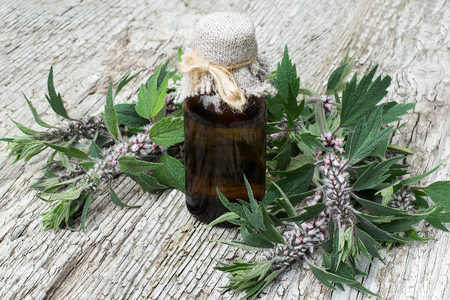 Motherwort (Leonurus cardiaca) and pharmaceutical bottle. Other names: throw-wort, lions ear, and lions tail. Used in herbal medicine, it is a valuable honey plant