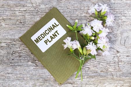 herbolaria: planta medicinal saponaria officinalis también conocido como soapwort común, rebotando-bet, jabón cuervo, salvaje dulce William, soapweed. y el manual de herbolario. Se utiliza en la medicina natural, la alimentación y la industria química