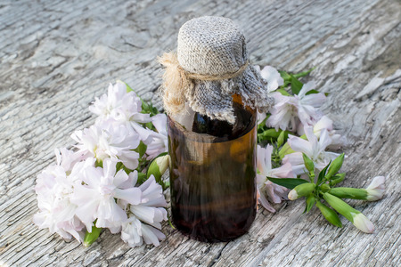 antibacterial soap: Medicinal plant Saponaria officinalis (common soapwort, bouncing-bet, crow soap, wild sweet William, soapweed) and pharmaceutical bottle. Used in herbal medicine, food and chemical industry Stock Photo