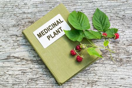 herbolaria: Rubus idaeus planta medicinal (frambuesa, frambuesa roja o de vez en cuando como frambuesa Europea) y el manual de herbolario en la vieja mesa de madera. Activamente utilizado en la medicina natural y la alimentación saludable