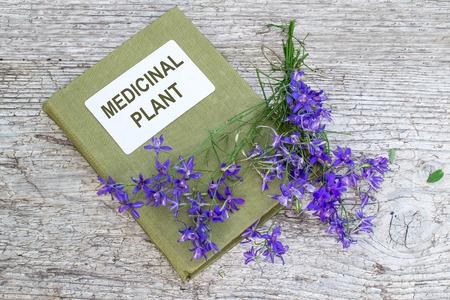 herbolaria: planta medicinal Consolida regalis (bifurcar Larkspur, Rocket-espuela de caballero, espuela de caballero de campo) y el manual de herbolario en la vieja mesa de madera. Se utiliza en la medicina herbal, buena planta de miel