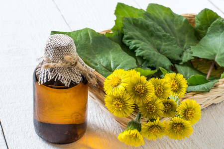 Medicinal plant coltsfoot (Tussilago farfara). The infusion, leaves and flowers in a basket on white wooden background. Selective focus Stock Photo