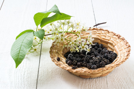 Medicinal plant bird cherry (Prunus padus). Flowering branches and dried berries in a wicker bowl on a white wooden background. Selective focus Stock Photo
