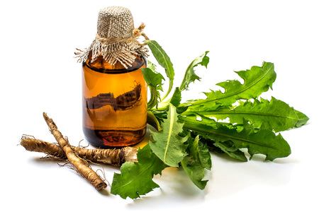Medicinal plant dandelion (Taraxacum officinale). Dandelion leaves, roots and pharmaceutical bottle on a white background.