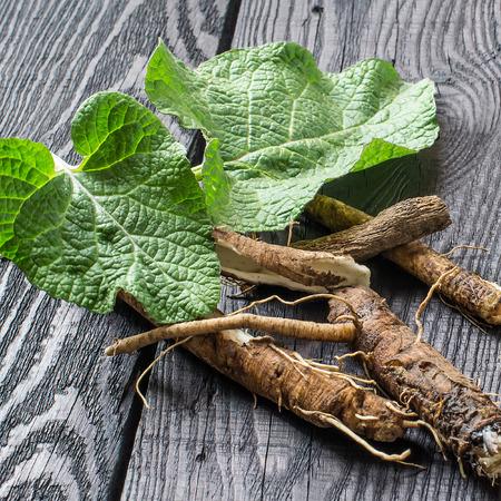 Geneeskrachtige plantenziekte (Arctium lappa). Bladeren en rooten op een donkere houten achtergrond. Het wordt gebruikt voor de behandeling en verzorging van haar. Vierkant beeld