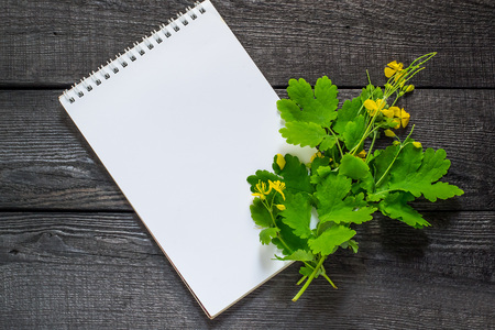 antispasmodic: Medicinal plant celandine and notebook to write recipes and methods of application. Widely used in the treatment of skin diseases Stock Photo