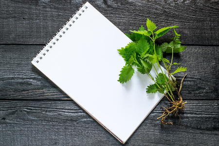 formic: Medicinal plant nettle (Urtica dioica) and notebook to write recipes and methods of application. It is used in herbal medicine, food preparation and production of fabrics
