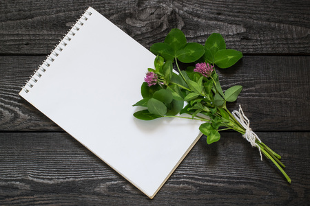 antispasmodic: Medicinal plant Red clover (Trifolium pratense) and notebook to write recipes and methods of application. Used in herbal medicine, cooking, to animal feed, honey plant