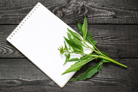 Medicinal plant Bunias orientalis (Turkish rocket, hill mustard, Turkish warty cabbage, warty cabbage) and notebook to write recipes and methods of application. Used in herbal medicine, cooking
