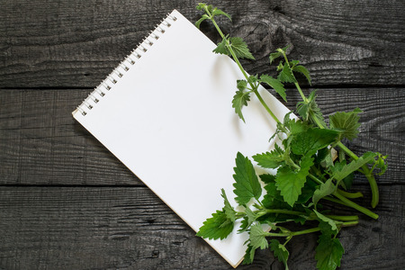Medicinal plant melissa officinalis  and notebook to write recipes and methods of application. Used in herbal medicine, in the preparation of food and drinks