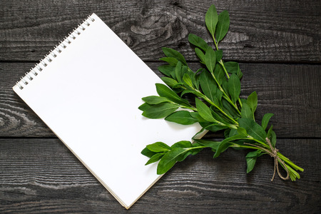 Medicinal plant Polygonum aviculare or common knotgrass (prostrate knotweed, birdweed, pigweed and lowgrass) and notebook to write recipes and methods of application. Used in herbal medicine, cooking Lizenzfreie Bilder