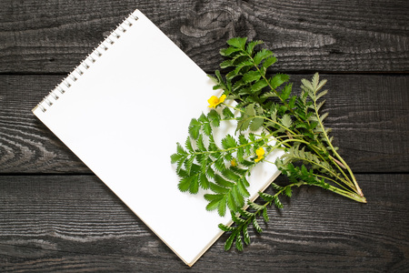 Medicinal plant Silverweed (Potentilla anserine or Argentina anserina) and notebook to write recipes and methods of application. Used in herbal medicine, bee plant Lizenzfreie Bilder