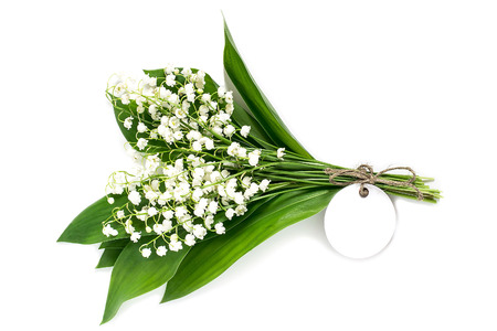 Medicinal plant lily of the valley (convallaria majalis) on white background. Used in pharmaceutics for production of cardiotonic drugs as well in phytotherapy, aromatherapy. Plant is poisonous Stock Photo
