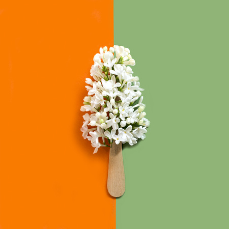 Flowers of white lilac on stick like ice lolly. Minimalism. Creative concept of summer food. Two-color background. Top view Фото со стока
