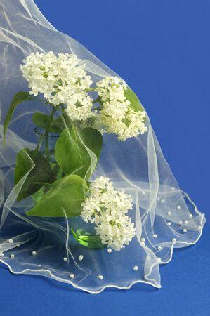 Flowers of white lilac under veil. Original design for greeting card