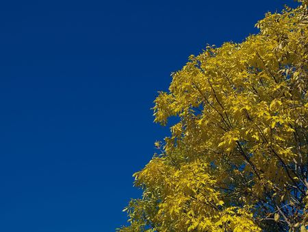 autumn landscape with blue sky and yellow tree photo