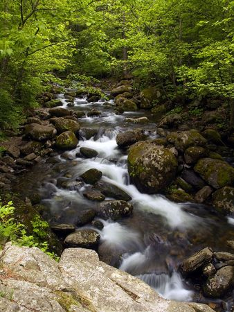 summer forest mountain stream Stock Photo
