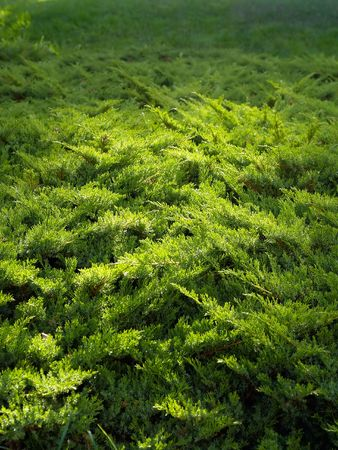 elfin: green elfin wood illuminated by evening sun Stock Photo