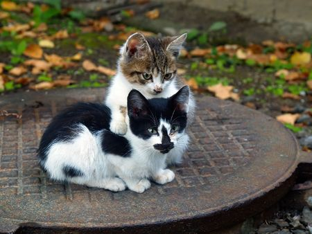 a pair of pitiable homeless small cats get warming  series 2 of 3 Stock Photo