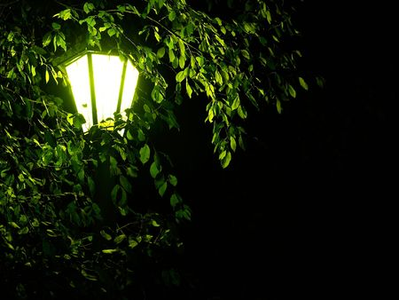garden lamp: night old-fashioned light through leaves and branches