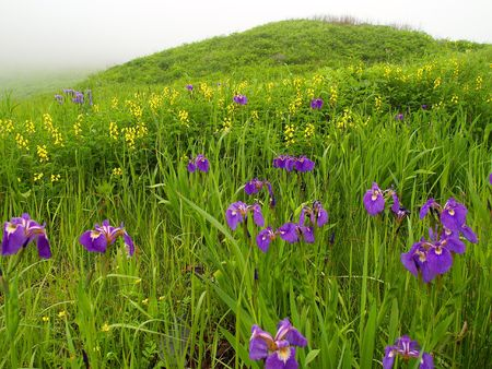 violet and yellow meadow flowers on foggy day