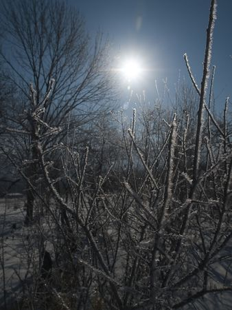frozen branches of the trees against the sun Stock Photo - 745857