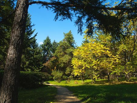 autumn park with firs and pines