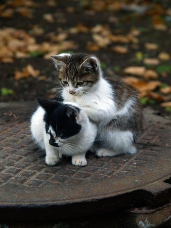 pair of homeless kittens  photo